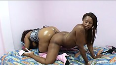 Big busty lesbians love to drill each other with a huge dildo