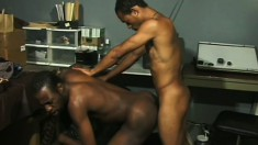 Horny black dude sucks his lover's ebony dick before it invades his ass